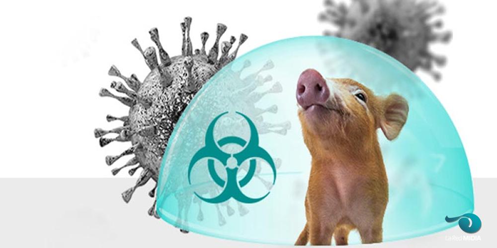 ¡URGENTE! Identifican en China un nuevo Tipo de gripe porcina que podría transmitirse a humanos